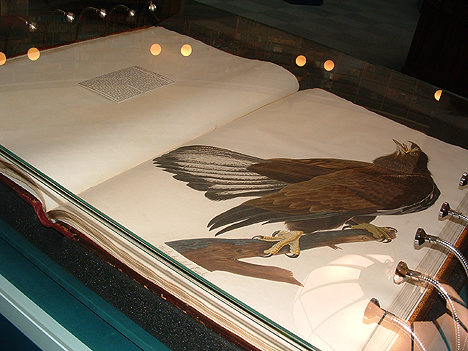 A volume of the Central Library copy open at White Headed Eagle