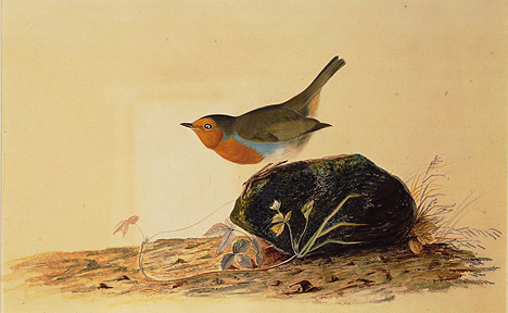 Robin Perched on a Mossy Stone, JJ Audubon (1826) reproduced with kind permission of University of Liverpool Victoria Gallery & Museum