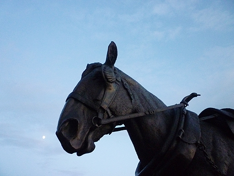 Working horse sculpture, Canning Dock, entitled Waiting